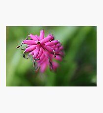 Lámina fotográfica Pink Matchstick
