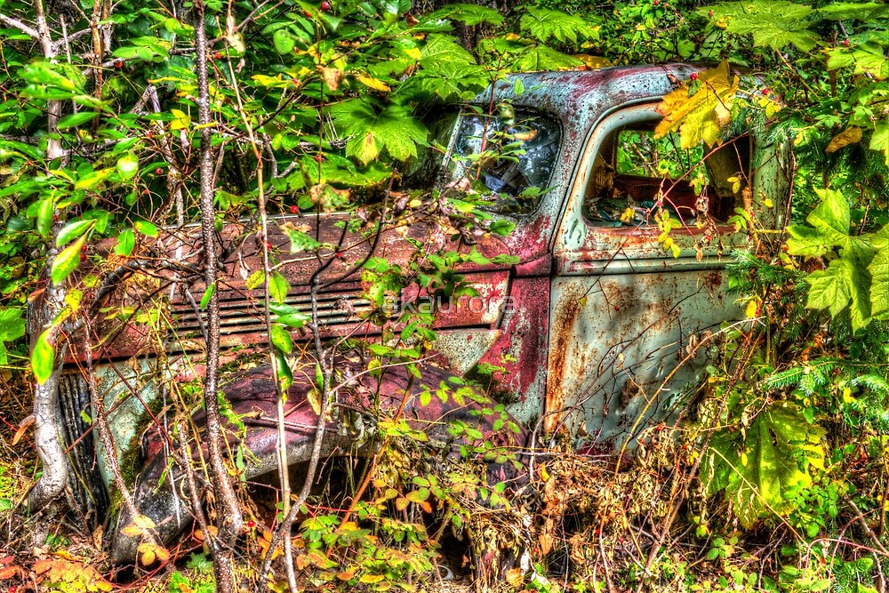 Surrounded By Natures Colors - HDR by akaurora