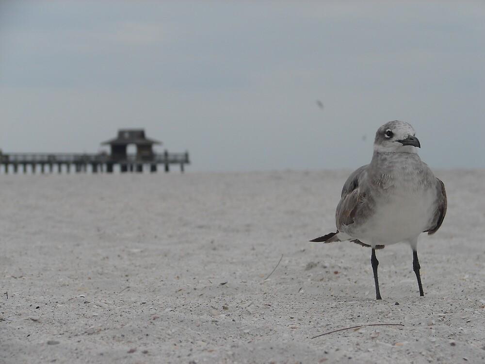 sea gull by redstone
