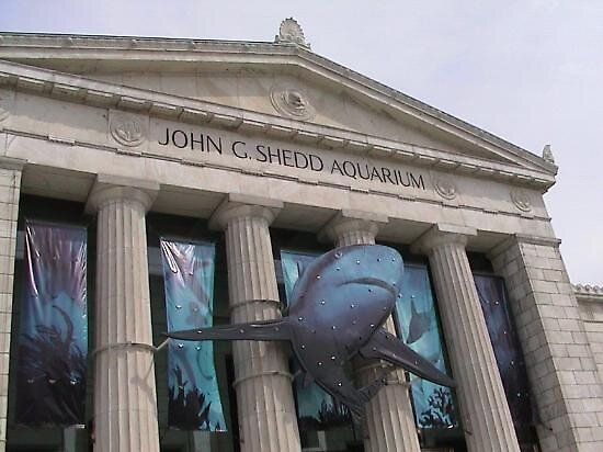 Shedd Aquarium Chicago Illinois By Chord0 Redbubble