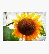 Bright And Breezy Photographic Print