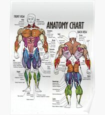 Muscle Chart - Anatomy Diagram For Fitness Poster