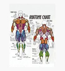 Muscle Chart - Anatomy Diagram For Fitness Photographic Print