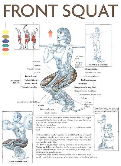 Pósters «Día de la pierna: sentadilla frontal: ejercicio, diagrama ...