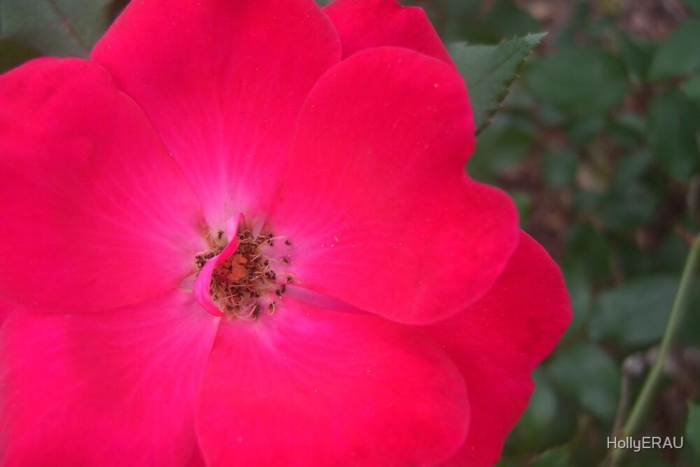 Flower 1 by HollyERAU