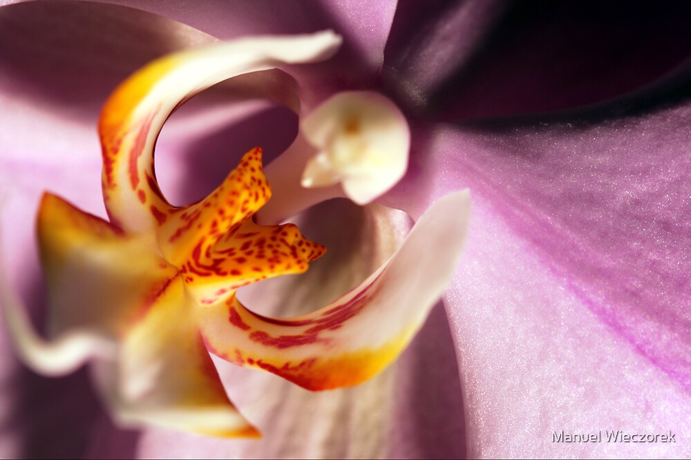 Orchid by Manuel Wieczorek