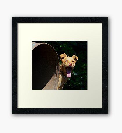 Bored dog :) Framed Print