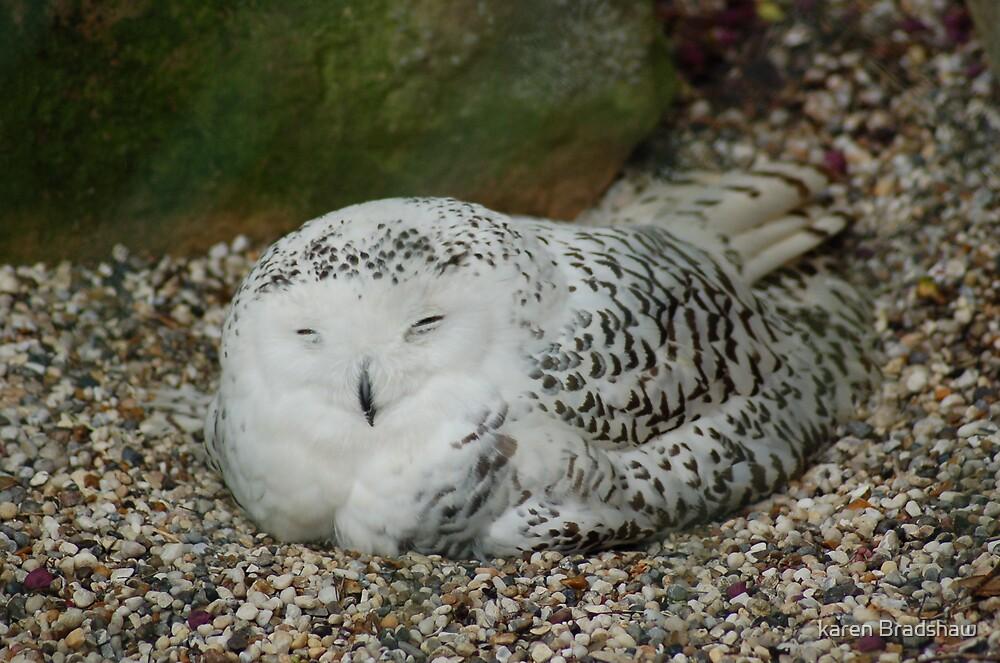 Nap Time !!!!!!!! by karen Bradshaw