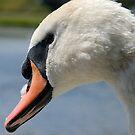 Swan by Niamh Harmon
