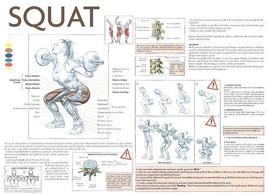 Pósters «Sentadilla - Día de la pierna - Diagrama del músculo del ...