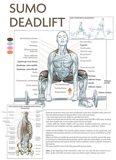 Sumo Deadlift Exercise Muscle Diagram Posters By Myfitspiration