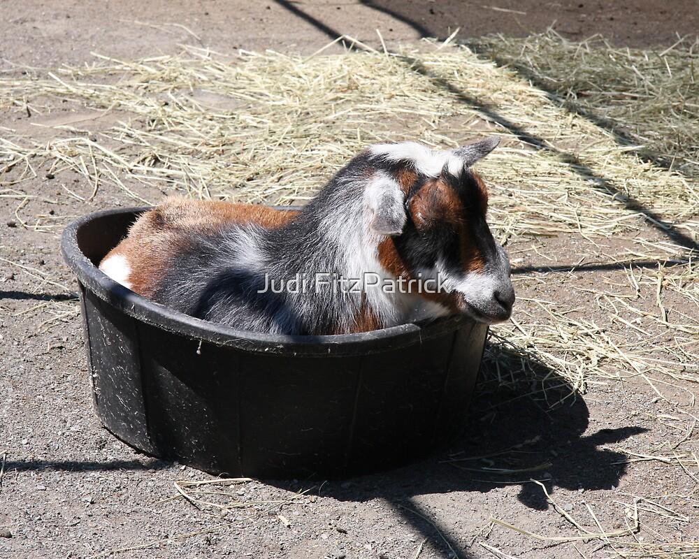 Goat In A Bucket by Judi FitzPatrick