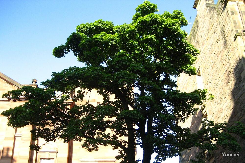 Summer Tree by Yonmei