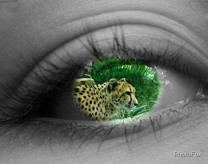 Cheetah Watch by PhotoFox
