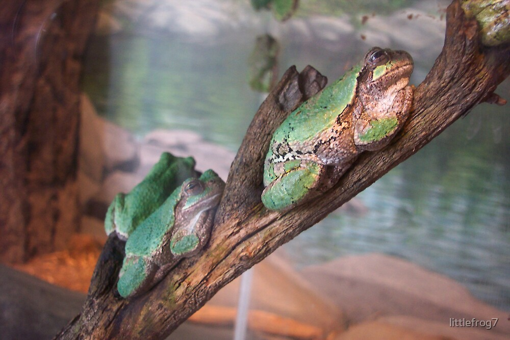 frog on tree branch by littlefrog7