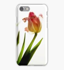 Single perfect tulip in a transparent vase  iPhone Case/Skin