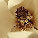Up Close and Personal With A Magnolia Blossom by Julie Conway
