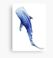 Whale Shark Canvas Print