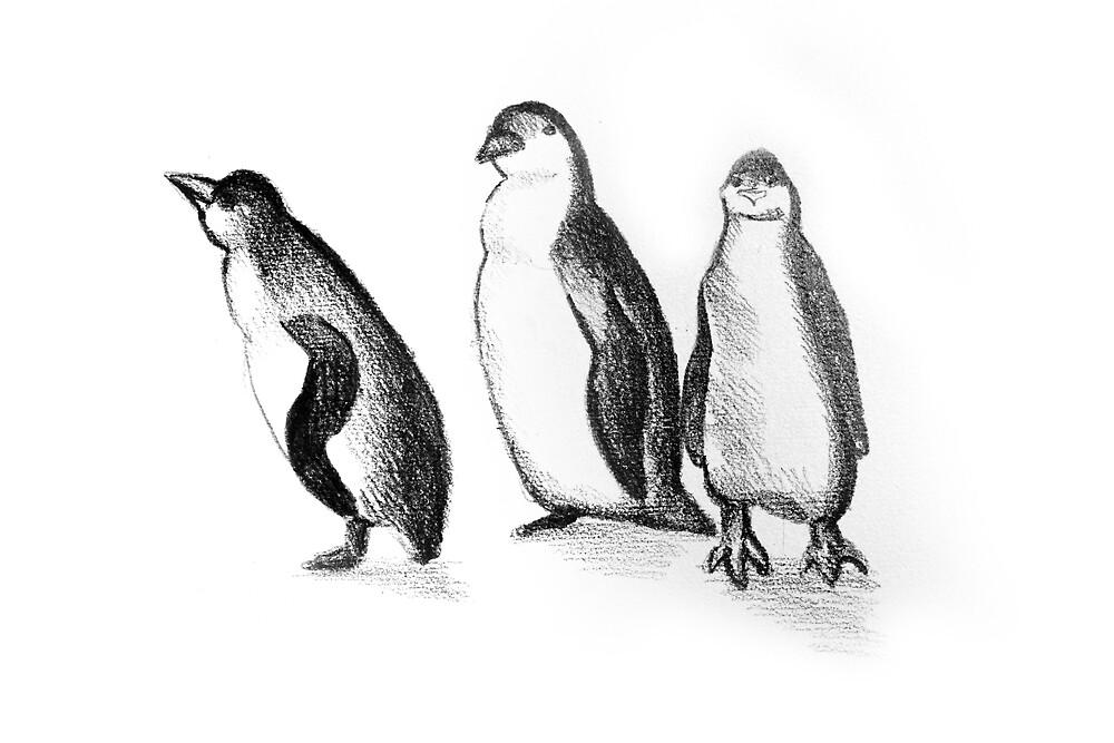 Drawing illustration of penguins  by oanaunciuleanu