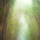 Fog Filled Forrest on Hawaii by Christopher Johnson