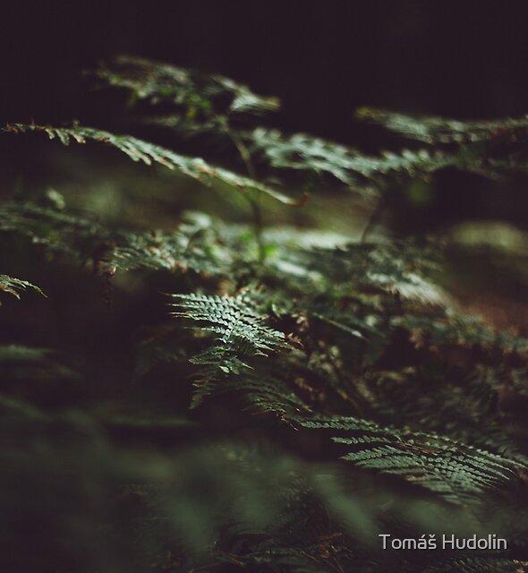 Fern in the shadow by Tomáš Hudolin