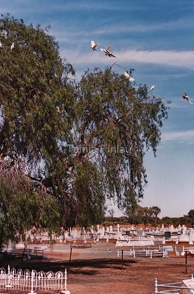 Broken Hill Cemetery by Tainia Finlay