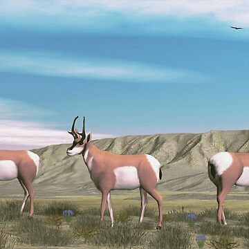American Antelope by Skyviper