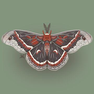 Cecropia Moth by phantomssiren