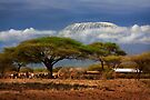 Kilimanjaro, and the Acacia Trees. Kenya, Africa. by PhotosEcosse