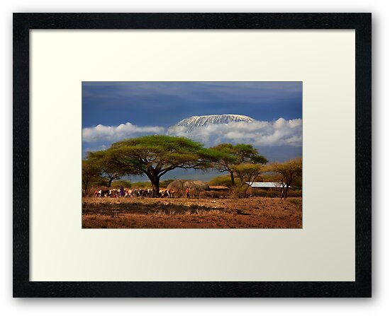 Kilimanjaro, and the Acacia Trees. Kenya, Africa. by PhotosEcosse
