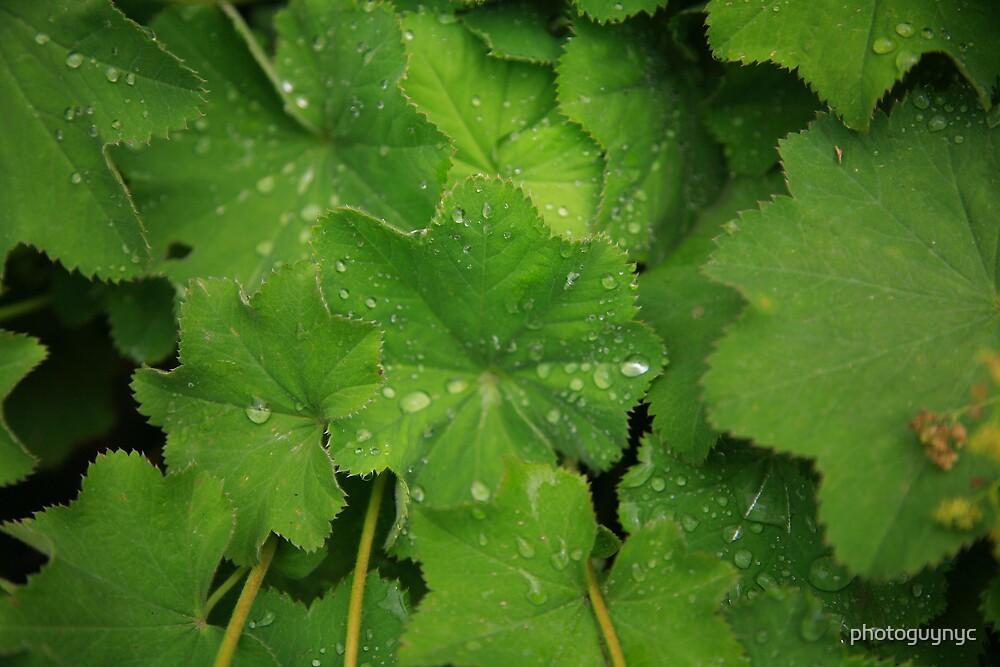 Morning Dew by photoguynyc