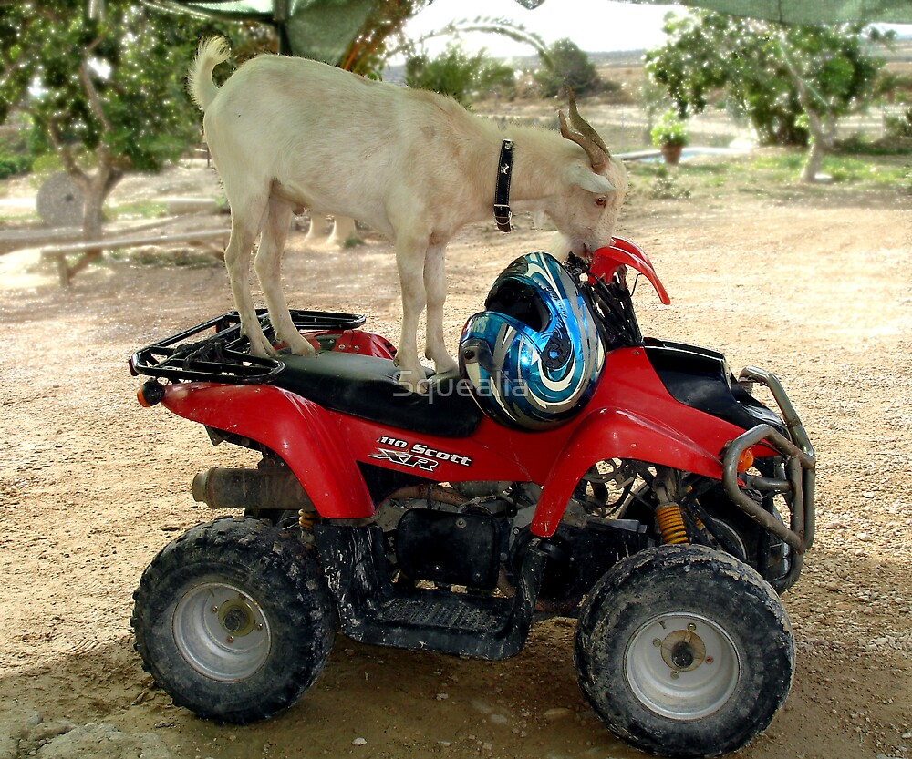 BILLY Wants To Ride A Quad! by Squealia