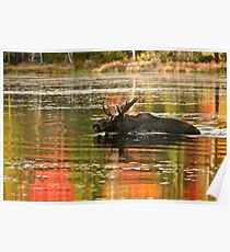Bull Moose Crossing Creek Poster