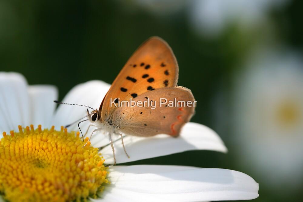 Orange Delight by Kimberly Palmer