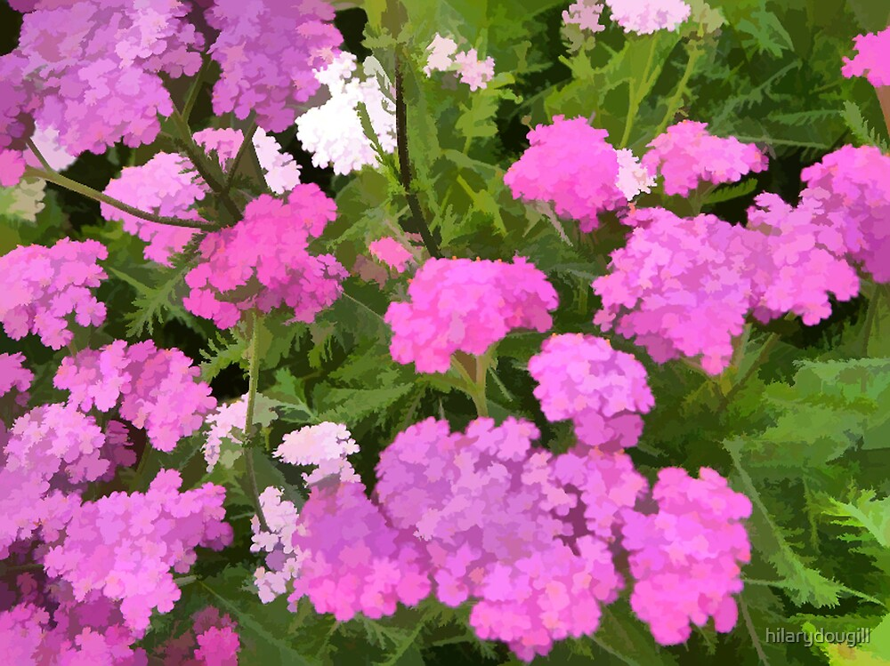 abstract of Pink Yarrow by hilarydougill
