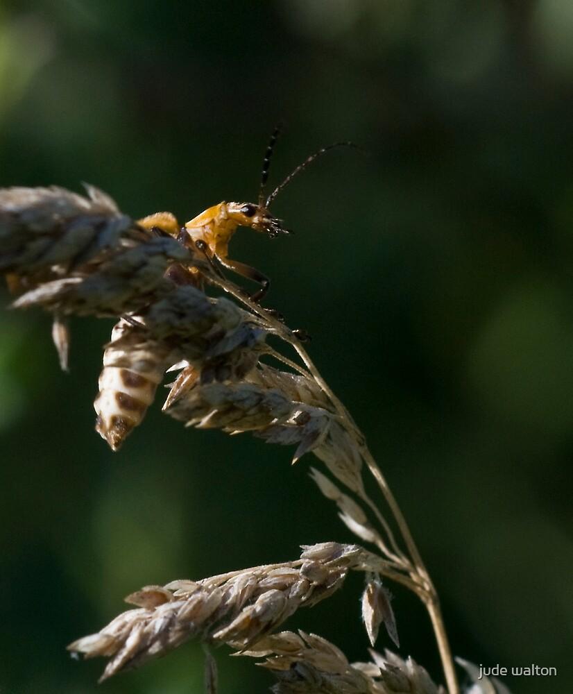firefly by jude walton