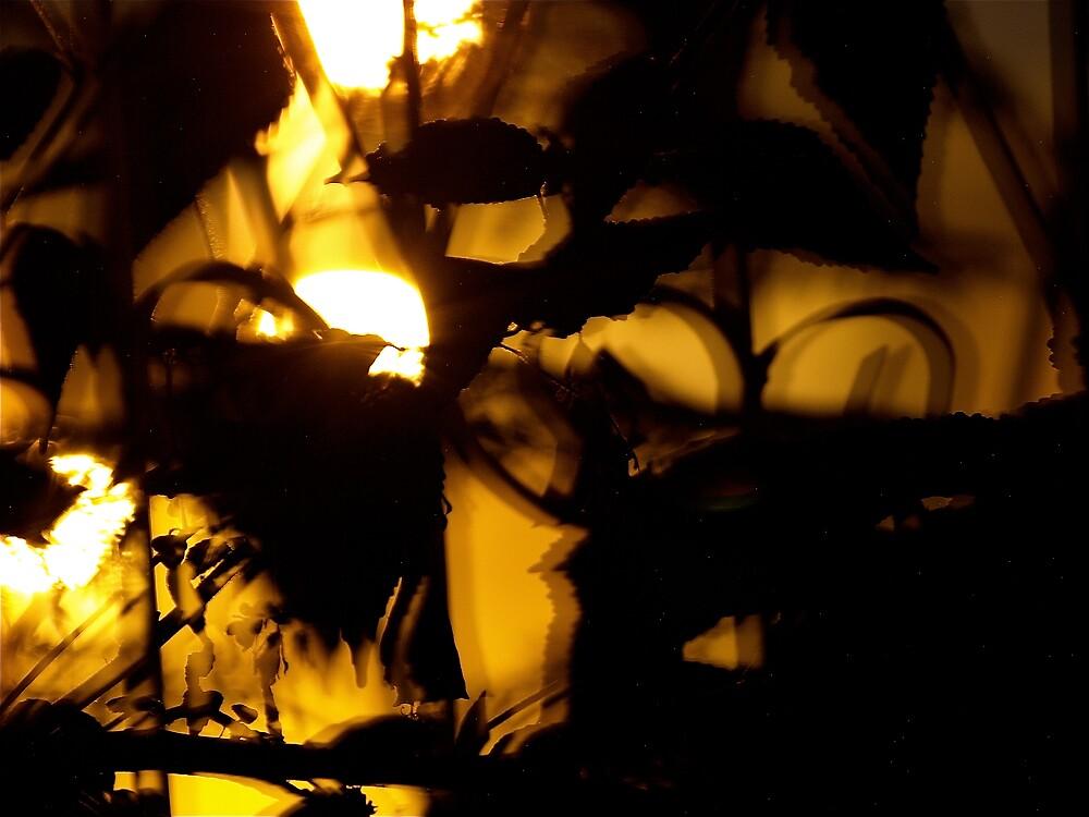 My window at midnight by MichaelBr