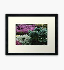 A Splash of Heather Framed Print