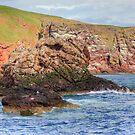 St. Abbs Rocks III by Tom Gomez