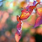 Colour My World Autumn by imaginethis