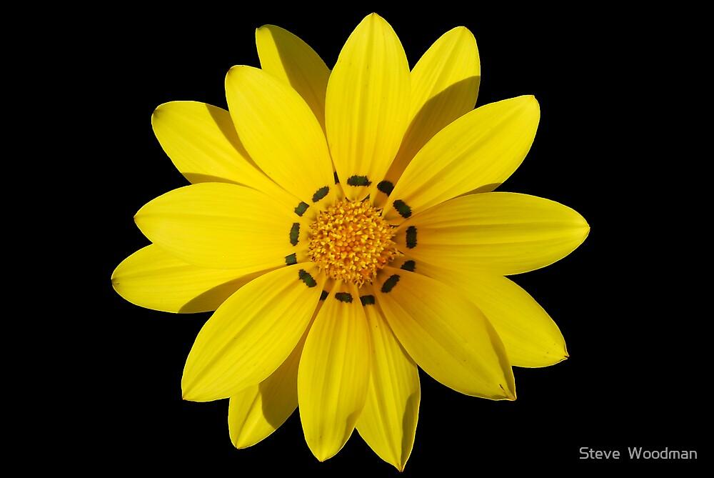 Yellow by Steve  Woodman