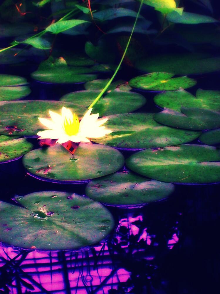 Lily Pond Dreams by MegJay