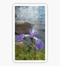 Photographie fleur iris mauve nature  Sticker
