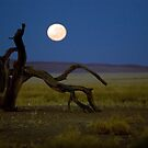 Moon set in the desert.  by David Tovey