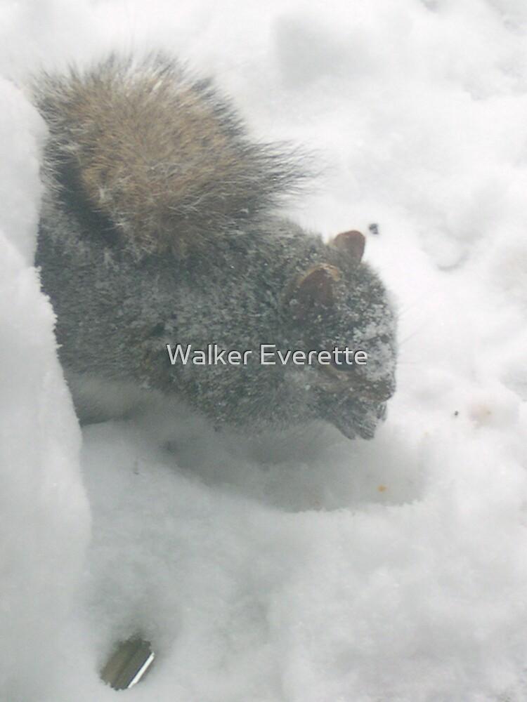 Snowy Squirrel 2 by Walker Everette