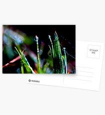 droplet Postcards