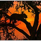 Leopard silhouette by Anthony Goldman