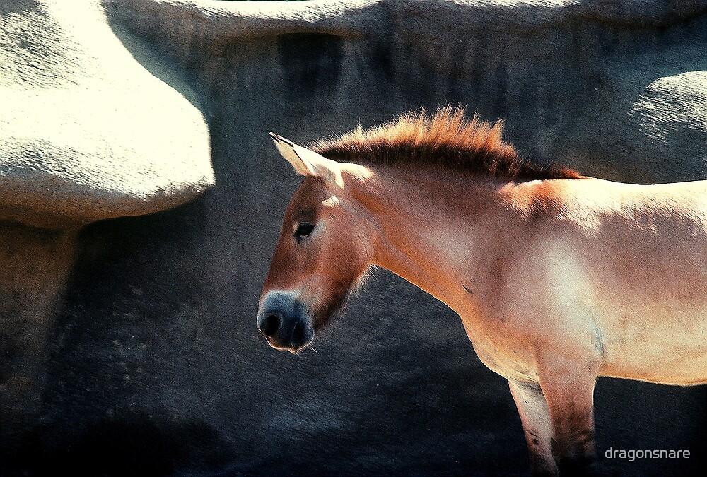 Przewaliski Horse by dragonsnare