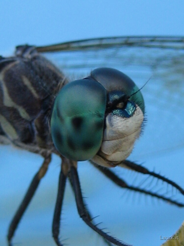 Decatur dragonfly, close by Laurkat