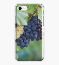 grape and vineyard iPhone Case/Skin